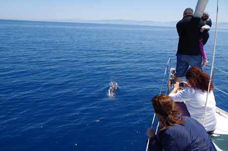 dolphins in charter in the aeolian islands